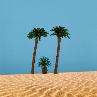 2 Kokospalmen 9 cm, 1 Palmfarn, 3 cm