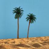 2 Kokospalmen, dunkelgrün, 11 cm + 13 cm