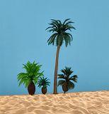 1 Kokospalme 13 cm, 2 Palmfarne 3 + 4 cm, 1 niedrige Kokospalme 5 cm